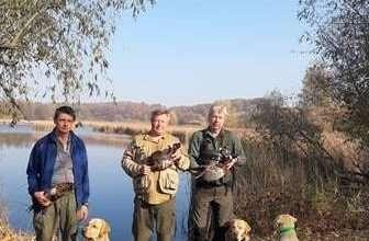Охота на фазана с охотничьими собаками