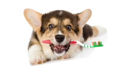 Чистка и уход за зубами собак