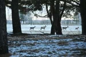 Как стать совладельцем охотничьих угодий