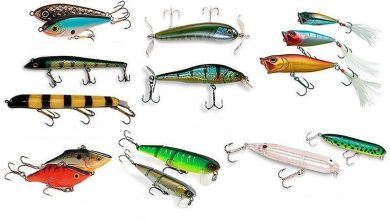 Выбор приманки и прикормки для рыбалки: виды и особенности использования